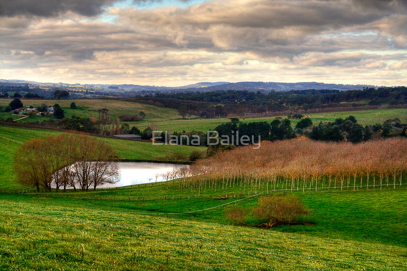 Winter in Balhannah, Adelaide Hills by Elana Bailey