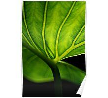 Green Sanctuary Poster