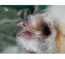 Baby Snowy Owl Photographic Print