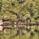 Lonely Boat - Patonga Creek by Jason Ruth