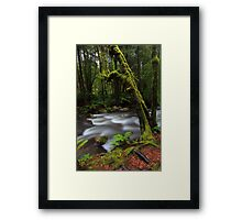 Taggerty River Framed Print