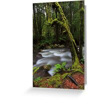 Taggerty River Greeting Card