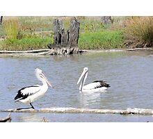 The Pelican Brief Photographic Print