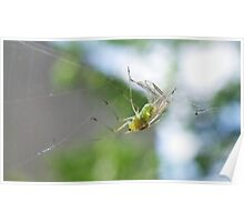 Greenfly Caught! Poster