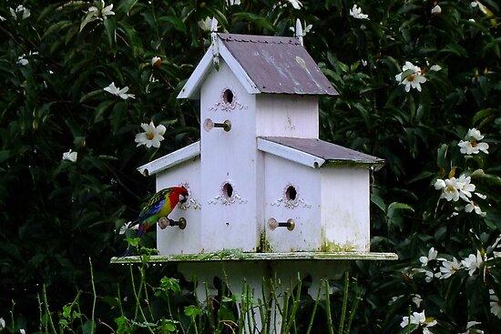 Needs a Wider Door by Gabrielle  Lees
