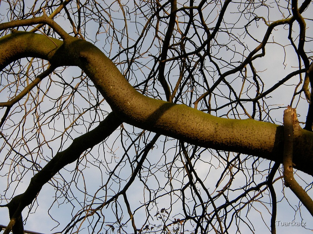 LONDON PARKS NATURALLY 21 ~ FREE CHOICE' REACH OUT by Tuartkatz
