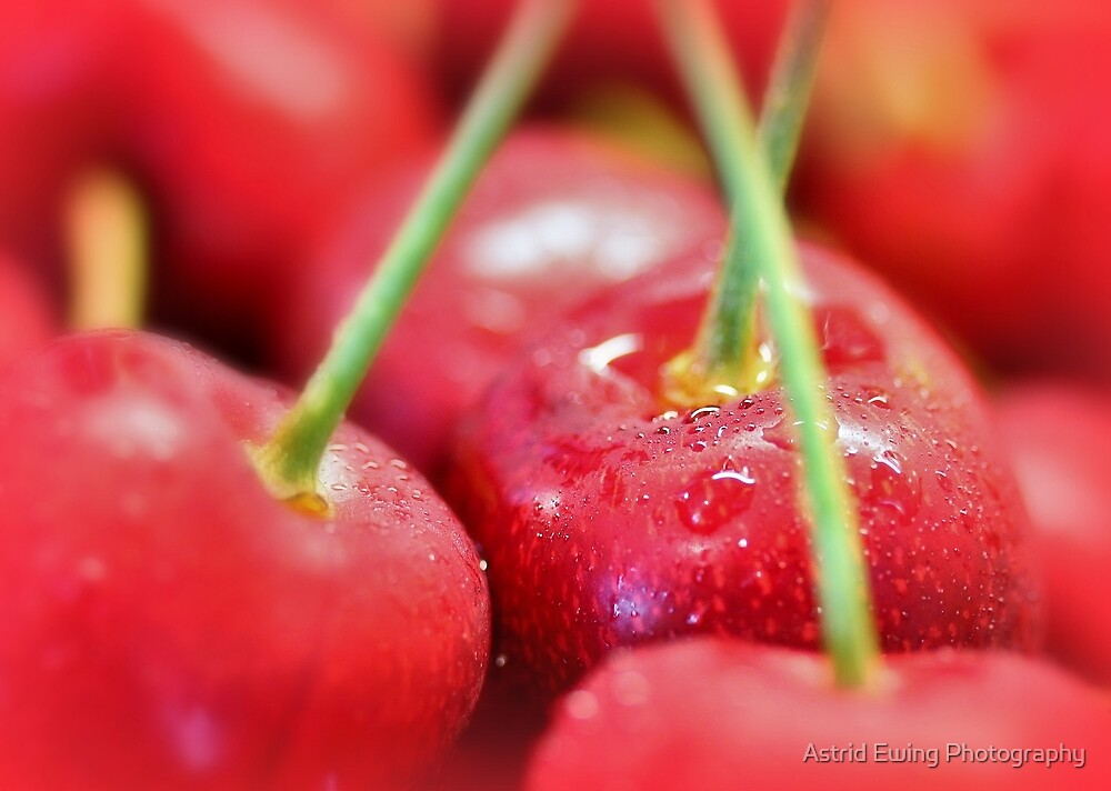 Cherry Drops by Astrid Ewing Photography