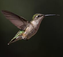 Hovering by photodug