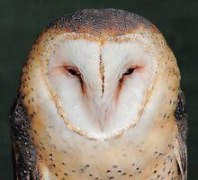 Barn Owl Portrait by stuart powell