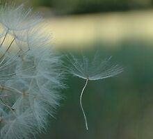 Seed set free by Bob Leckridge