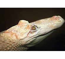 Albino Crocodile Photographic Print