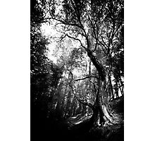 Langsett Photographic Print