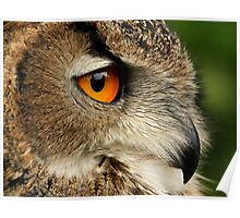 Eye of the Eagle Owl. Poster