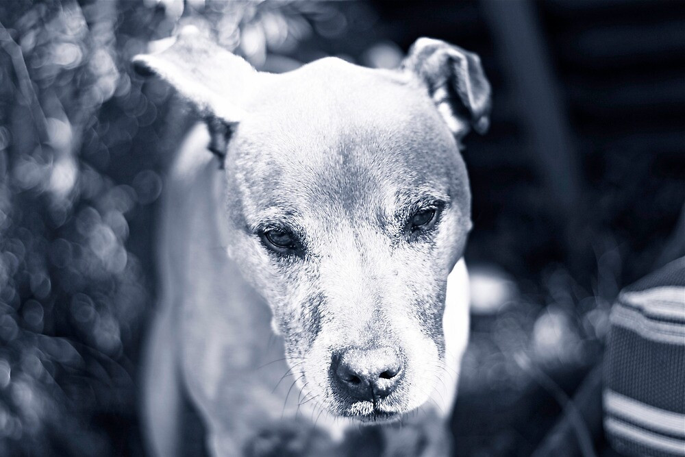 Whiskey Dog by adrianthology