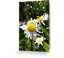 Ladybug and Daisies Greeting Card
