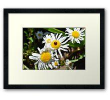 Daisy and Ladybug Framed Print