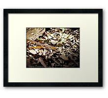 Coastal Taipan! Framed Print