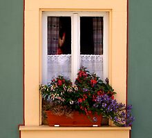 Sunny window box by Laurel Eby