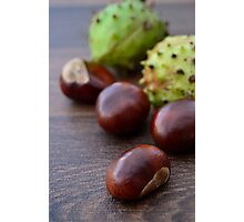 Scattered Warm Brown Conker Seeds and Shells Photographic Print