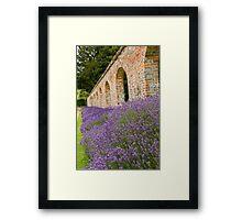 Lavender walled garden. Framed Print