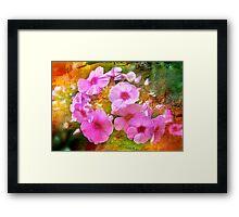 Pink Phlox Framed Print