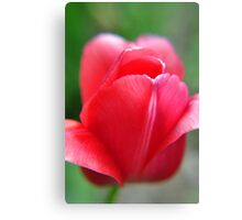 soft red tulip from Kingwood Center Canvas Print