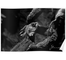 Lizard Black and White Poster