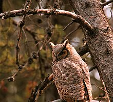 GREAT HORNED OWL by Chuck Wickham