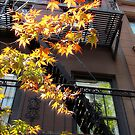 Urban Maple, NYC by Alberto  DeJesus