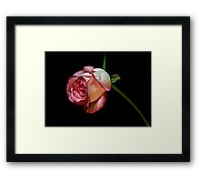 Lonely Rose Framed Print