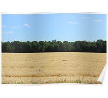 Grain Field on the Prairies Poster