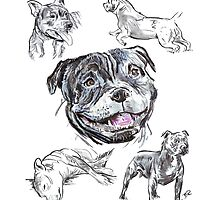 Mixed Media - Staffordshire Bull Terriers by Douglas Rickard