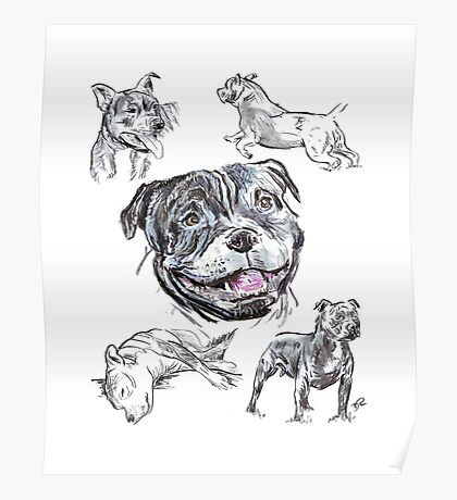 Mixed Media - Staffordshire Bull Terriers Poster