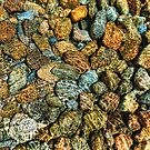 Water Rocks by Bruce Taylor