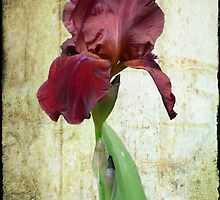 Lovely Iris by Maria Elena  Black