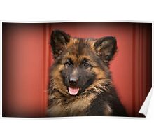 Queena - German Shepherd Puppy Poster