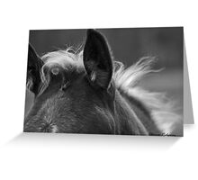 Baby Fuzz Montana foal photo by Donna Ridgway Greeting Card