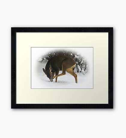 Deer With An Itch Framed Print