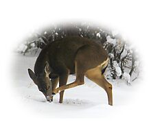 Deer With An Itch Photographic Print