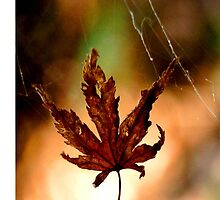 Leaf in a Web by WaterGardens