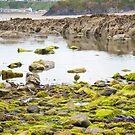 ballybunion castle kelp covered rocks by morrbyte