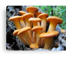 Callow Cluster Canvas Print
