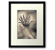 Garden variety monochrome Framed Print