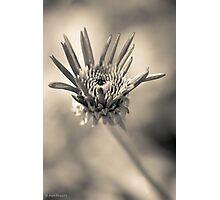 Garden variety monochrome Photographic Print