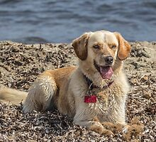 Dog on Beach by John Thurgood