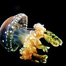 Lagoon Jellyfish by Phillip M. Burrow