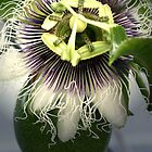 Passion Flower by angelmarie