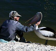 Pelican Love by Paula McManus