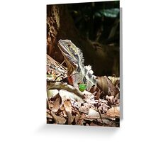Forest Lizard on the Gold Coast, Queensland. Greeting Card