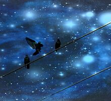Birds on a wire by Kerry  Hill